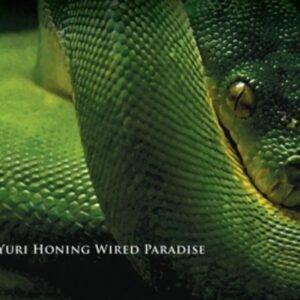 Temptation - Yuro Wired Paradise Honing
