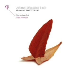 Bach: Motetten BWV 225-230 - Philippe Herreweghe